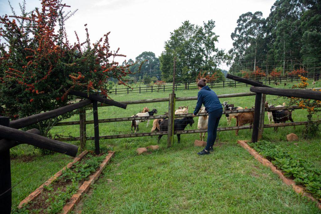 Elands Valley goats Dullstroom