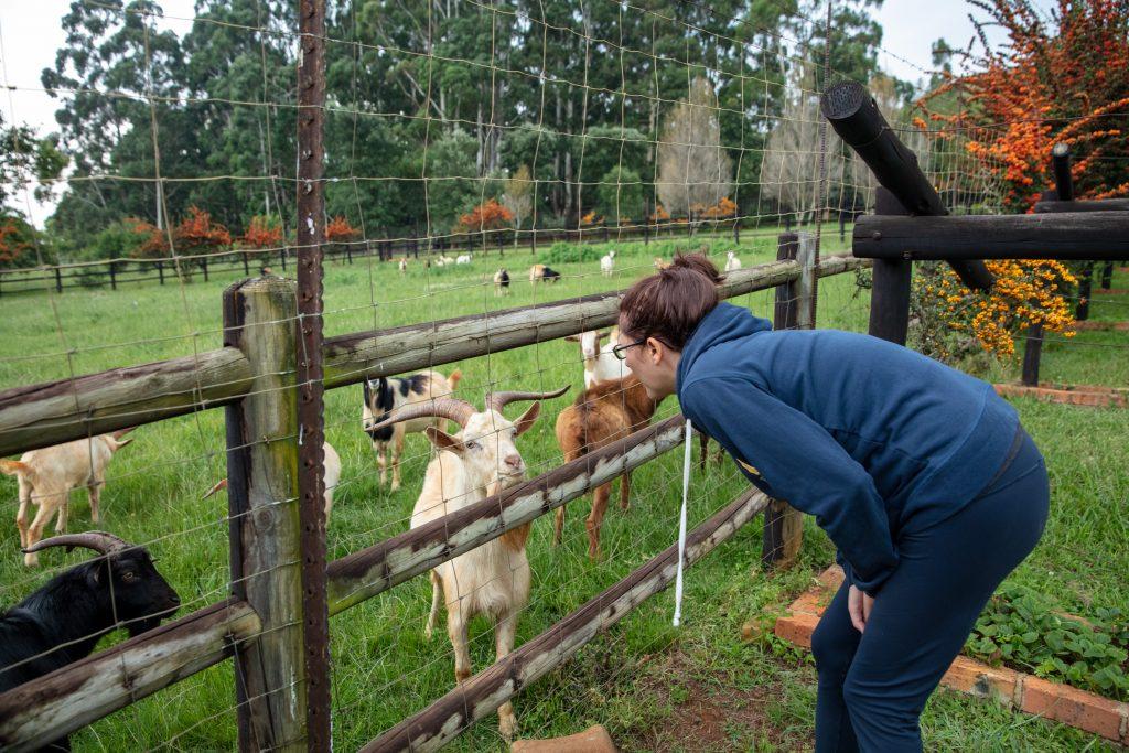 Elands Valley goats Ask Katie