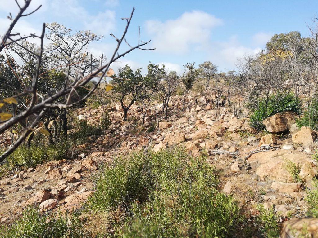 Rocky Geology Trail