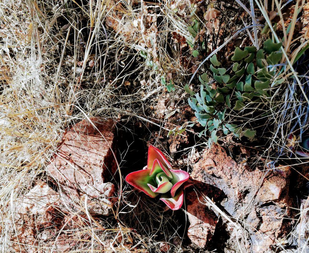 Flower at Hennops trails