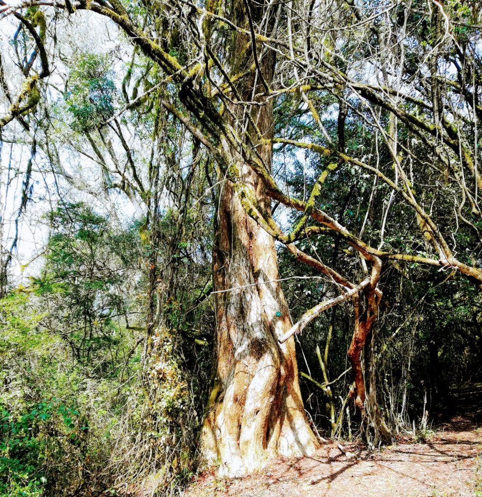Forest Louis Changuion Trail