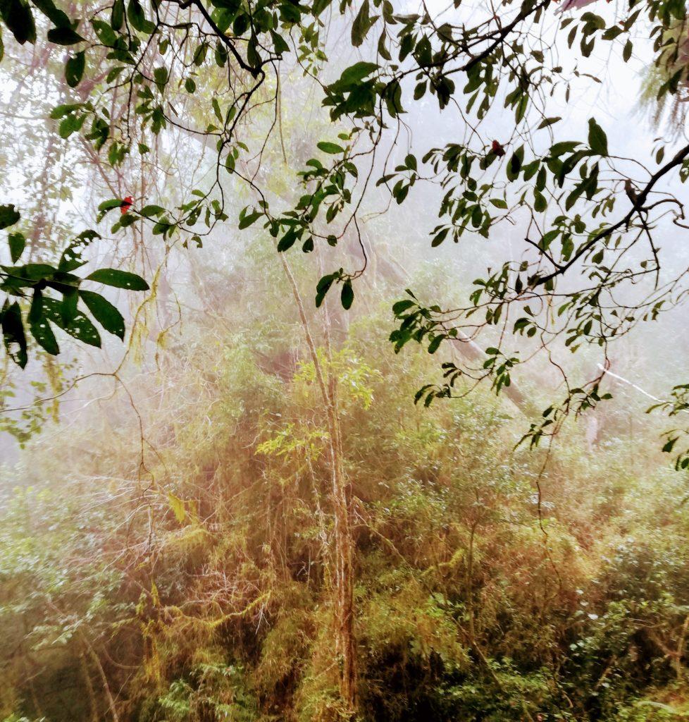 Jungle view Waterfall Walk